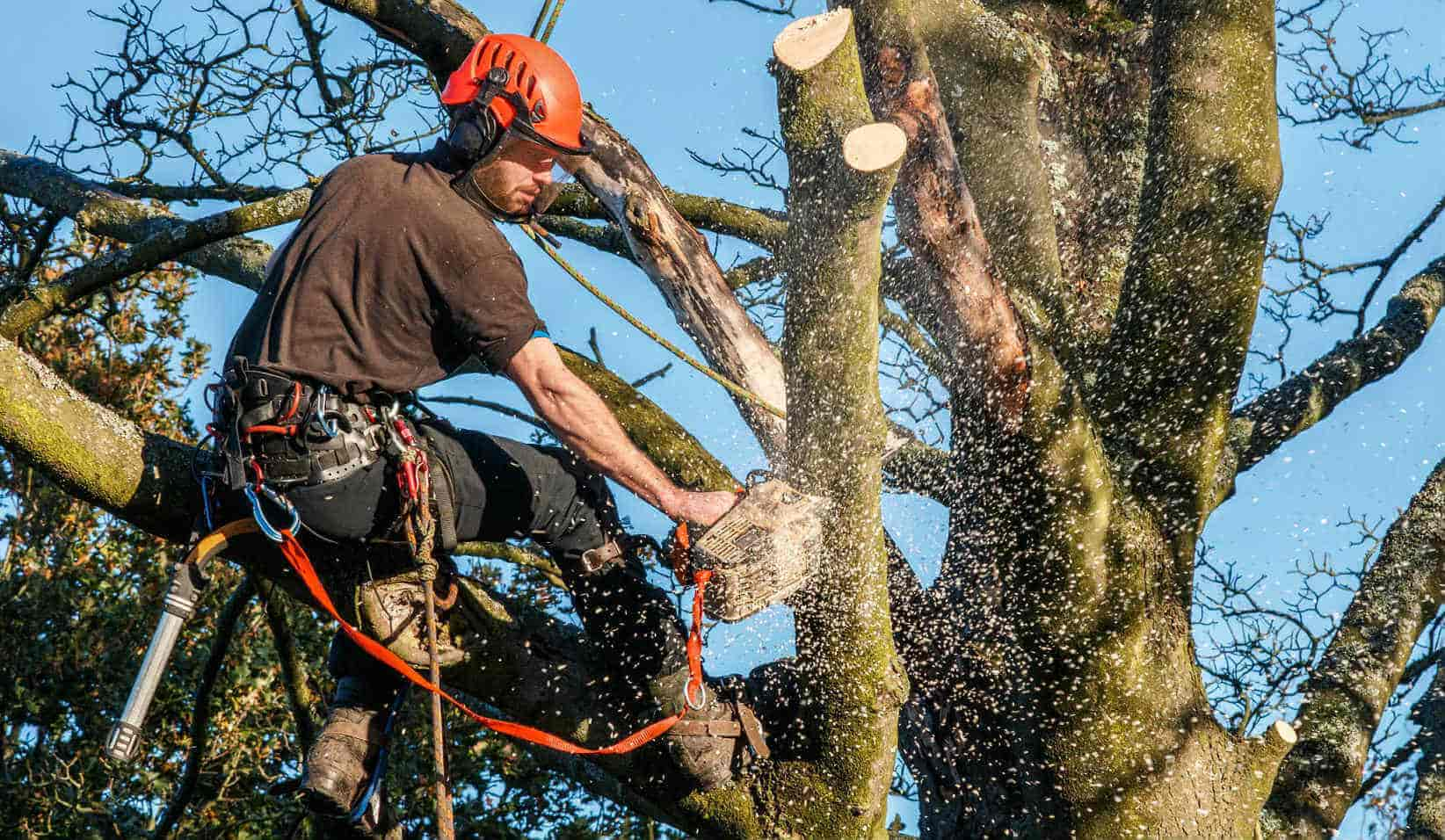 The Importance of Stump Removal and Grinding