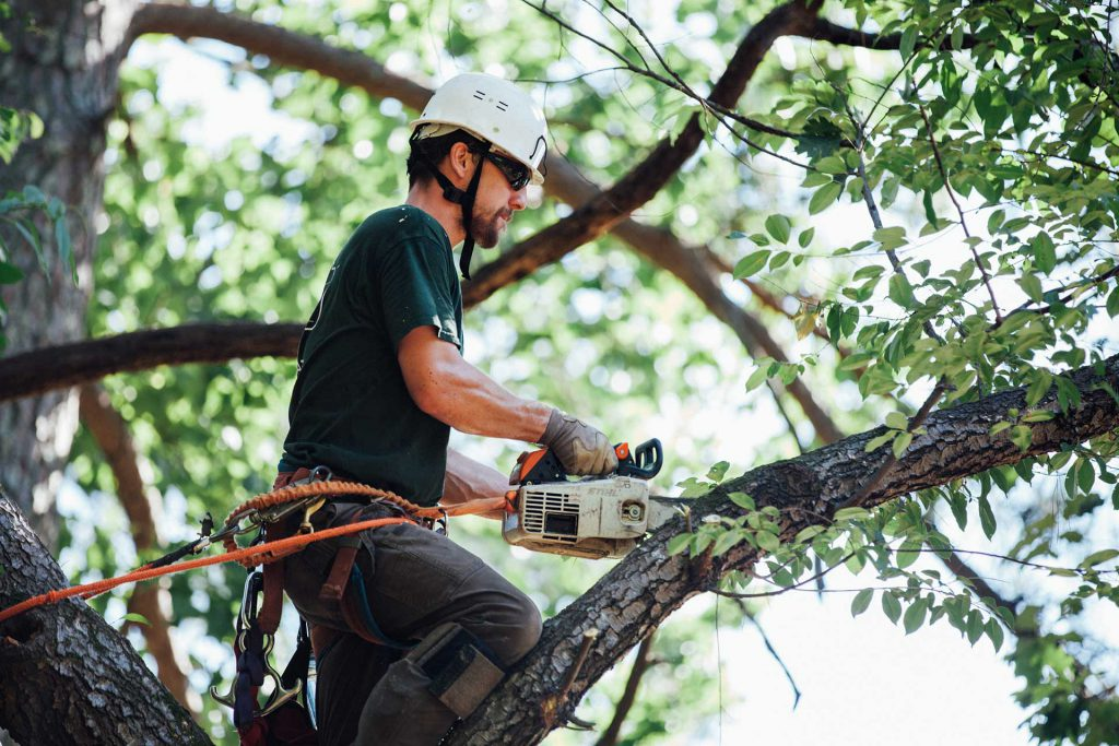 Things to Consider Before Hiring a Tree Trimming Service